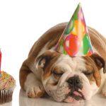 Сценарий «собачьего дня рождения»