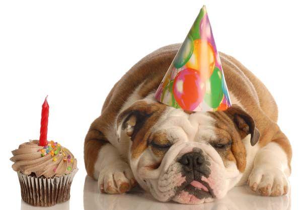 Собачий день рождения